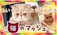 『猫のマッシュ』