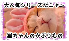 『かわいい かわいい ねこうさぎちゃん』